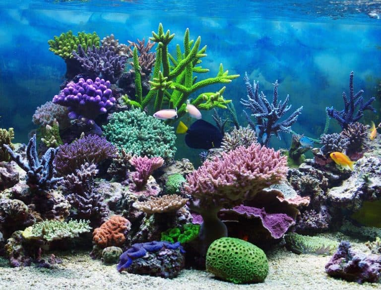 5 Best Dosing Pumps Reviews: Automate Your Freshwater Planted Tank or Saltwater Reef Aquarium