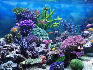 Fragging Corals