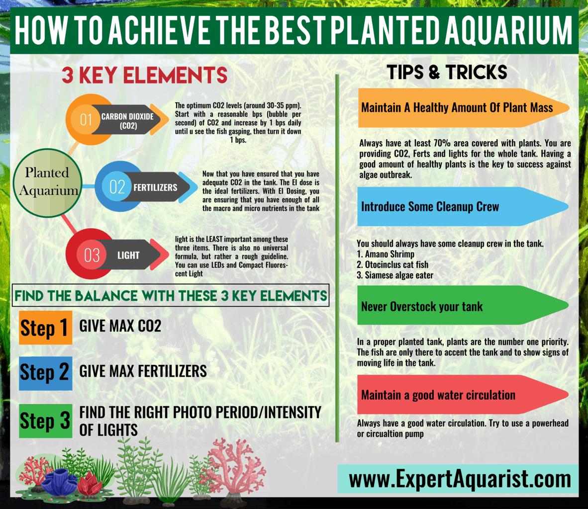 How to Achive the Best Planted Aquarium