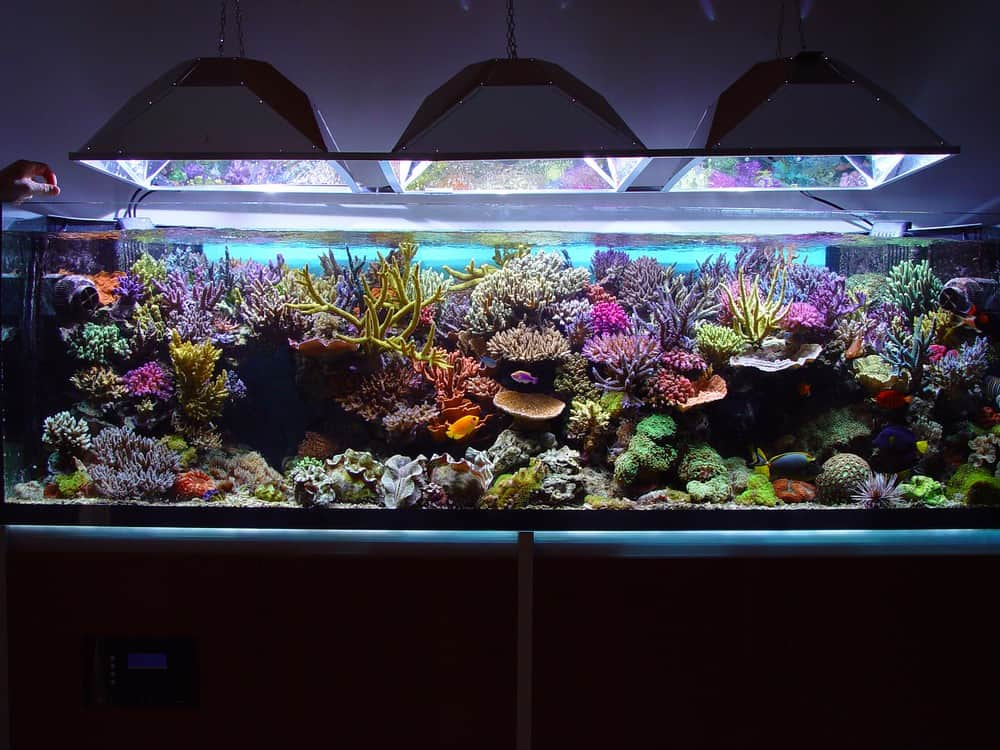 Best Auto Top Off System For Reef Tank