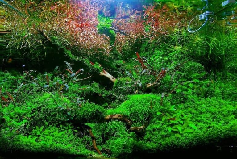 How To Achieve The Best Planted Aquarium: 3 Key Elements & Their Balance (From Personal Experience & Experiment)