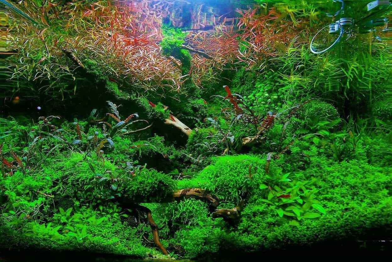 Best Planted Aquarium