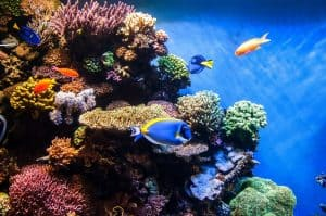 Dosing Your Reef Aquarium
