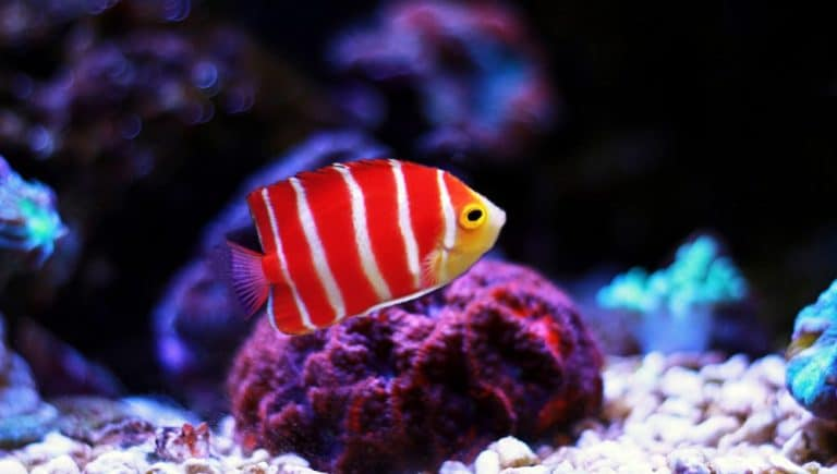 How to Quarantine Saltwater Fish: Step By Step Guide