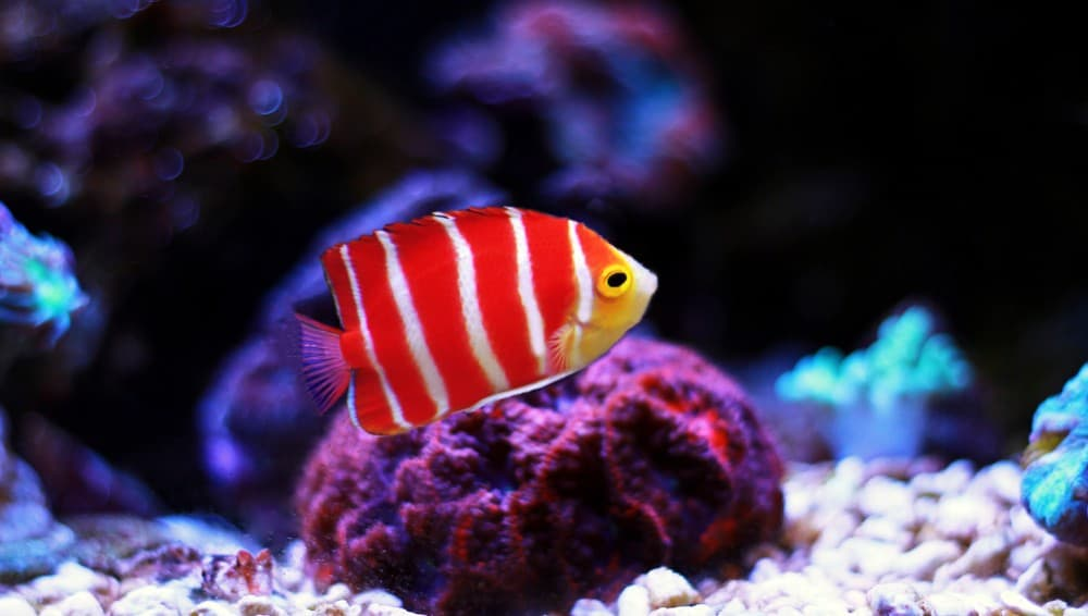 Quarantine Saltwater Fish