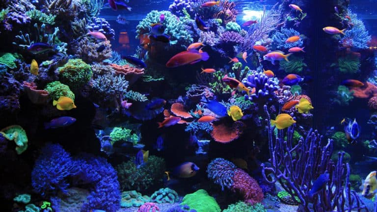 AI Hydra 26 HD Review: LED Light for Advanced Reef