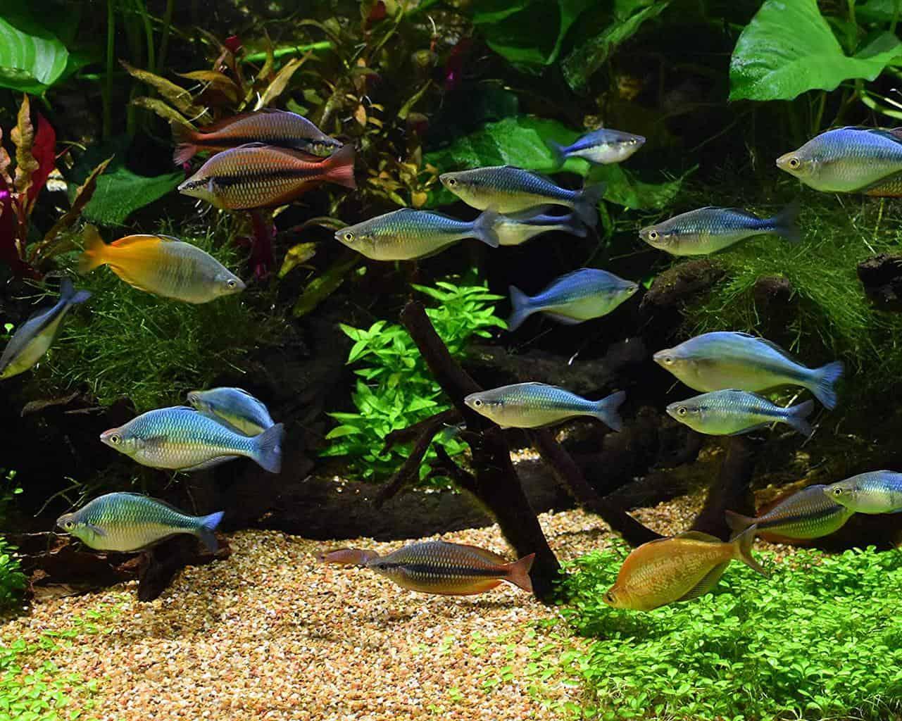Seachem Pristine Aquarium Treatment