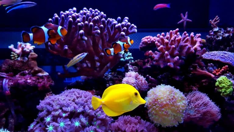 Some of the Most Endangered Aquarium Fish in the World