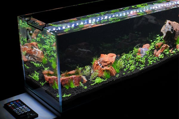 Current USA Satellite Freshwater LED Plus Review