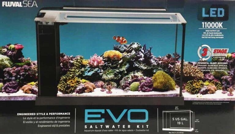Fluval Evo 5 Review: The 5 Gallon Marine Aquarium Kit