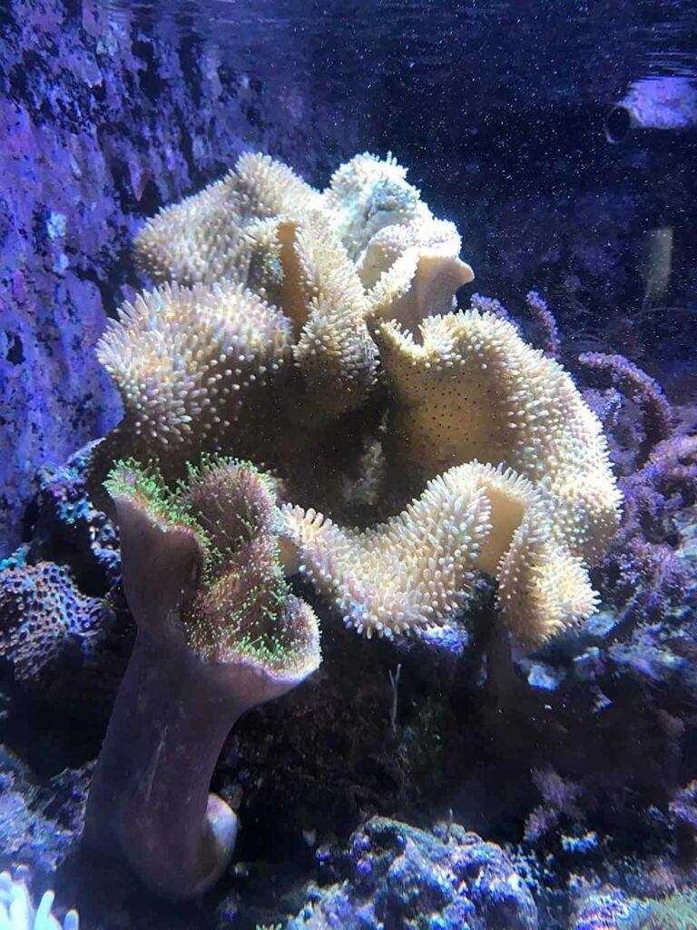 Seachem Reef Phytoplankton Review: Invertebrate Diet