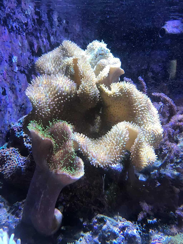 Seachem Reef Phytoplankton Review