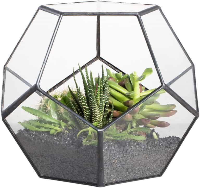 A Step by Step Guide To Make a Terrarium