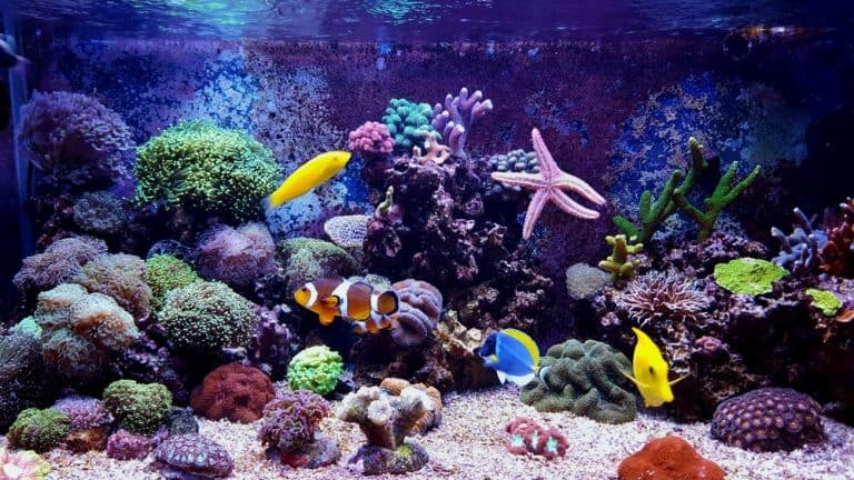 Fish Compatibility, Selection, Acclimation And Stocking Guide For A Marine Reef Tank