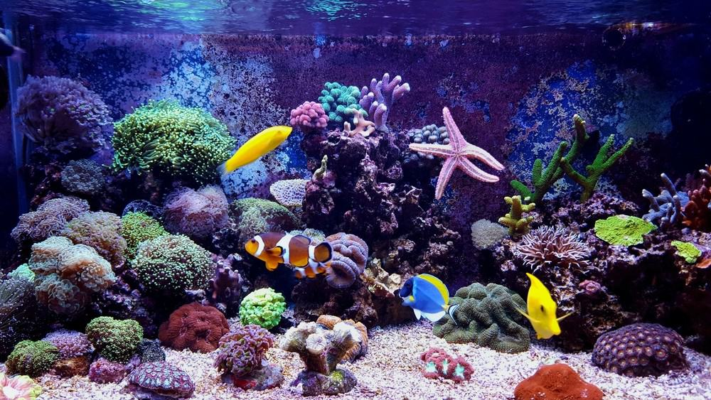 Reef Tank Stocking Guide