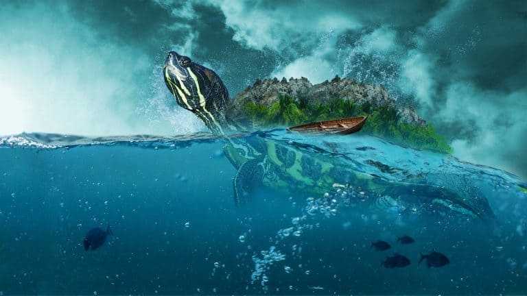 Can You Drown A Turtle: The Truth You Must Know