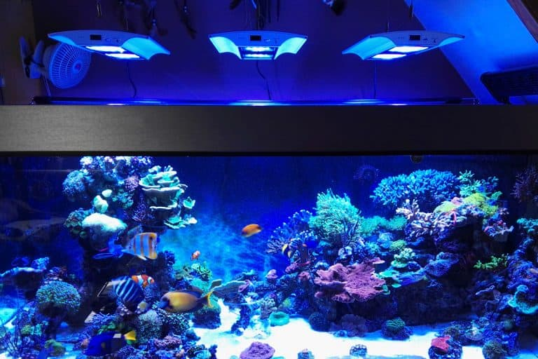 Giesemann VERVvE Review: Next Generation LED for Reef