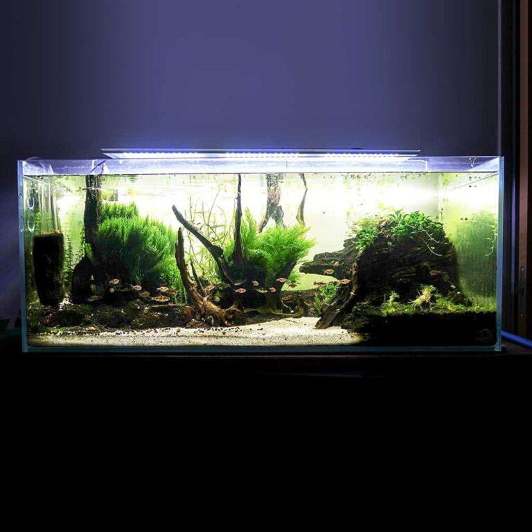 MICMOL Aqua Air Review: Smart LED Aquarium Light
