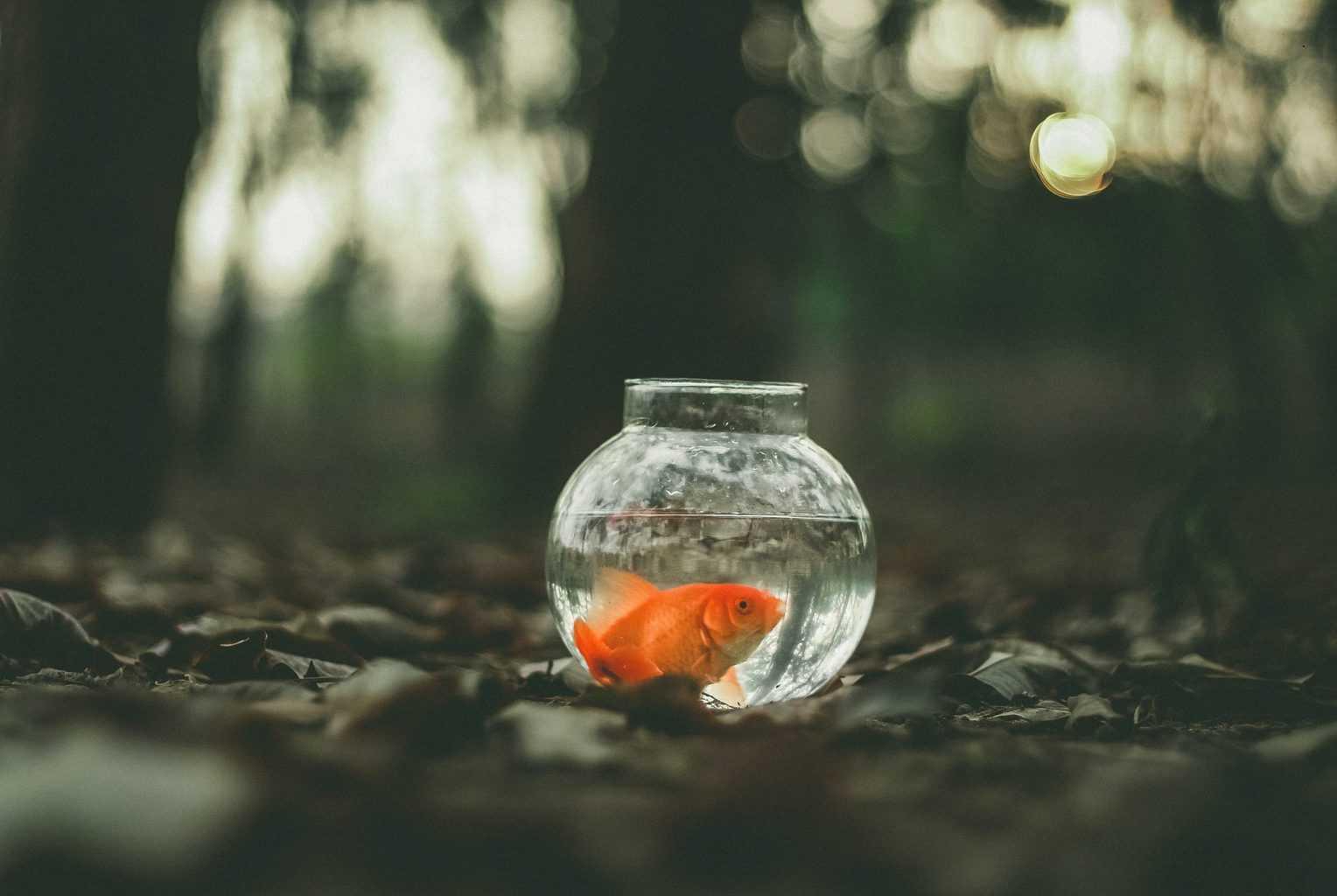 Suitable Plants For Goldfish Aquarium