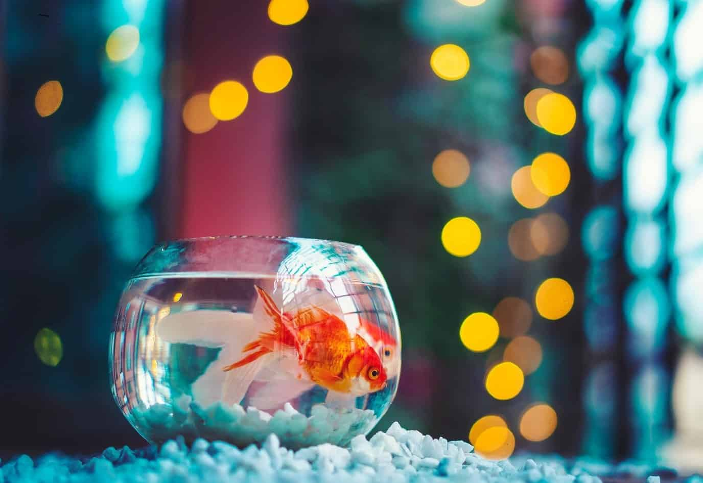 best plants for goldfish tank