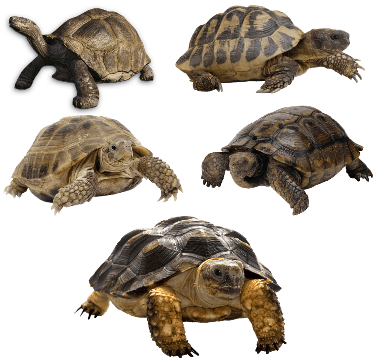 Turtle Vs Tortoise Vs Terrapin: Differences, Similarities & Requirements