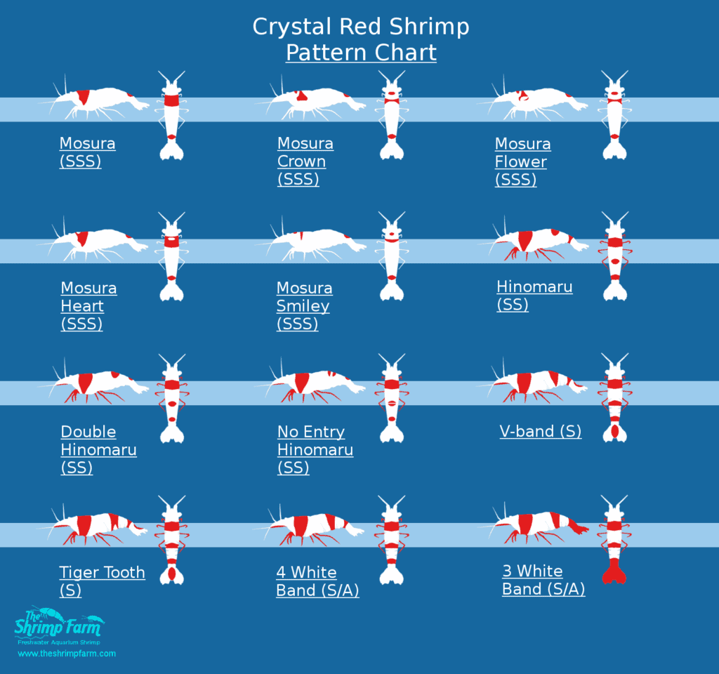 crystal red shrimp pattern chart