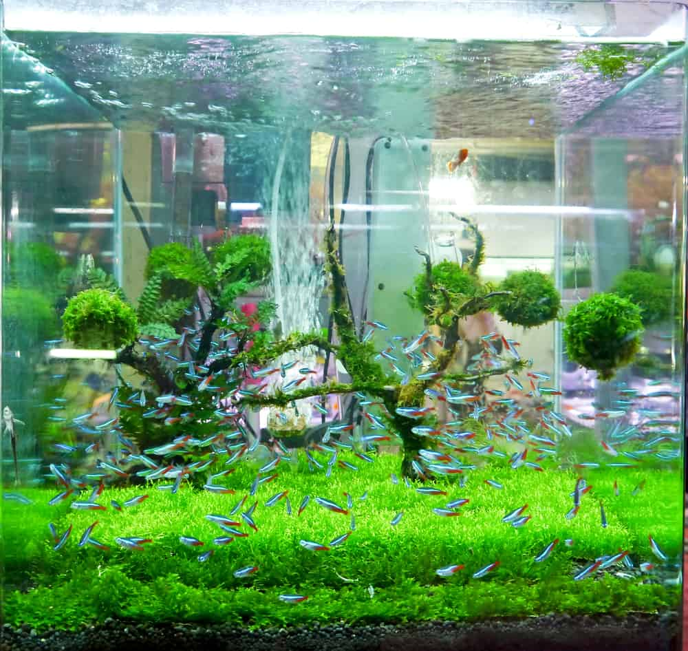 best aquarium carpet plants for beginners