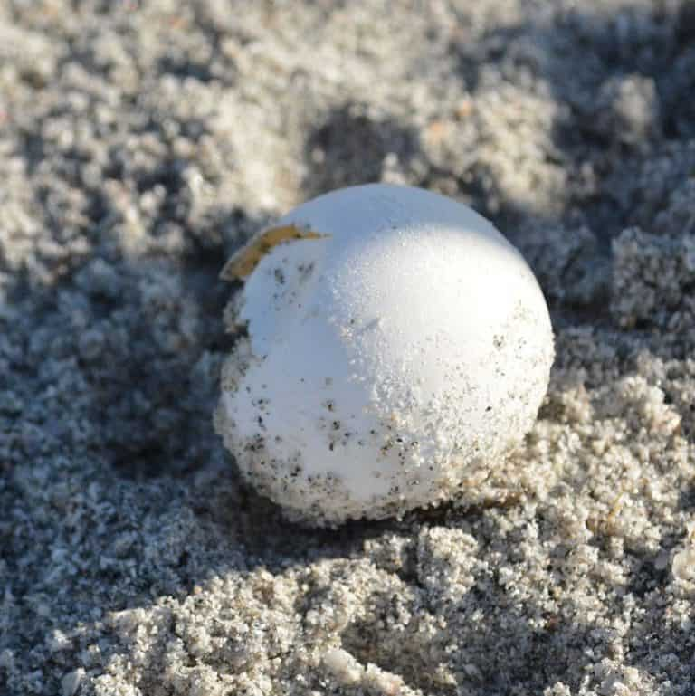 Tips and Guidance On How To Take Care Of A Turtle Egg
