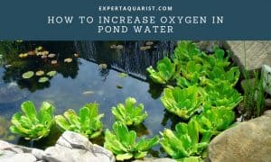 How to increase oxygen in pond water
