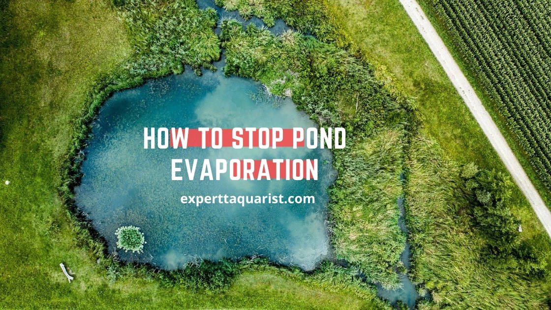 How to stop pond evaporation
