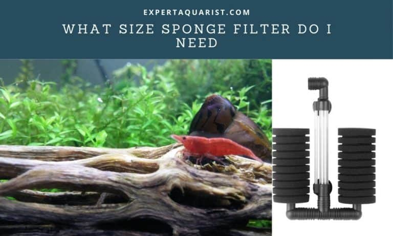 What Size Sponge Filter Do I Need: (Sponge Filter Selection Guide)