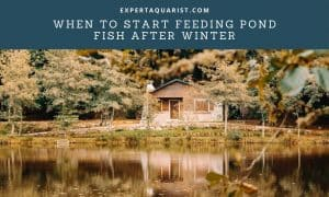 When To Start Feeding Pond Fish After Winter