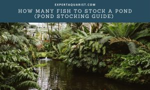 how many fish to stock a pond