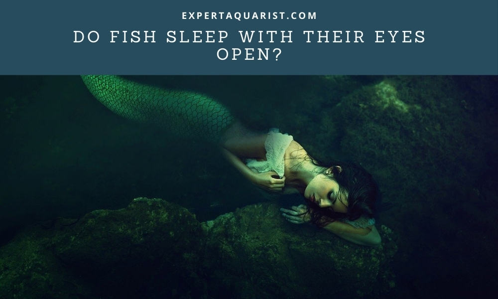 Do Fish Sleep With Their Eyes Open
