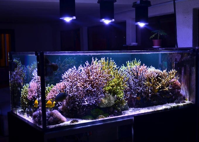 Light for Aquaria: Designed by Aquarists for Aquarists (Part – 1: The Manageable Spectrum)
