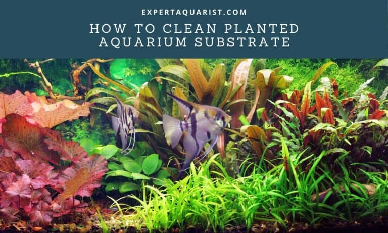 Tips on How To Clean Planted Aquarium Substrate