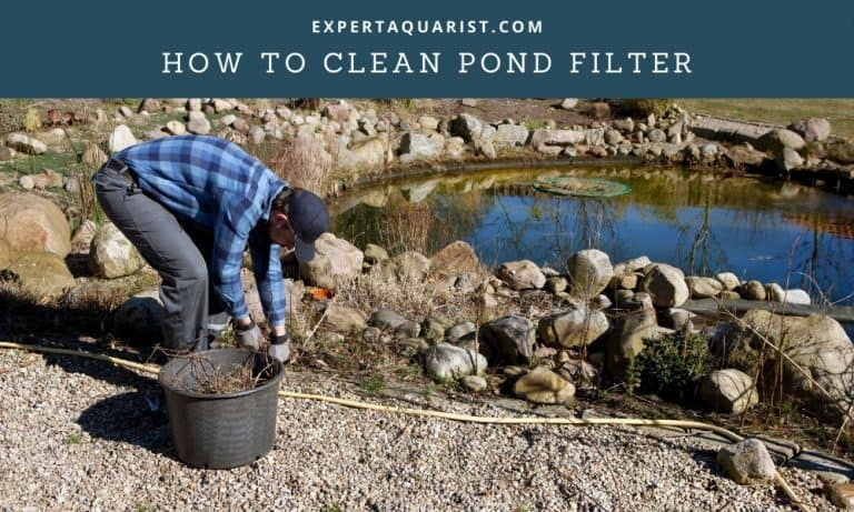 How To Clean Pond Filter (Without Harming The Beneficial Bacteria)