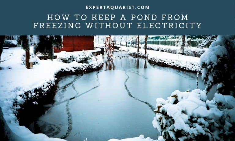 How To Keep A Pond From Freezing Without Electricity