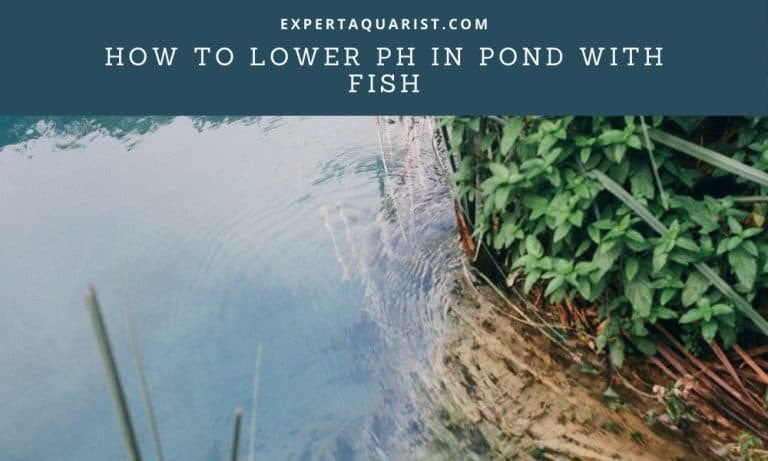 3 Safe Way To Lower pH In Pond With Fish
