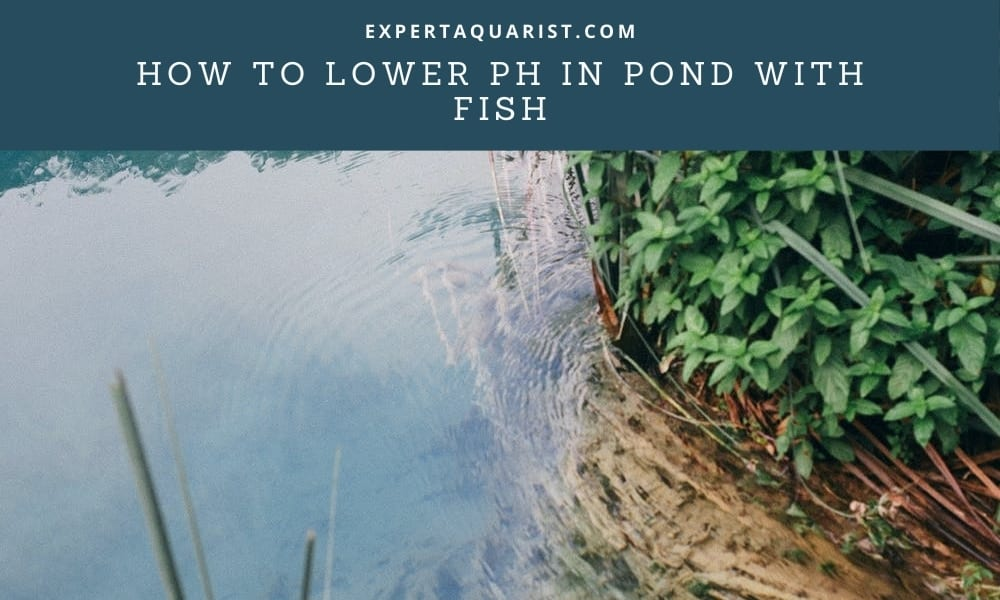 How To Lower pH In Pond With Fish