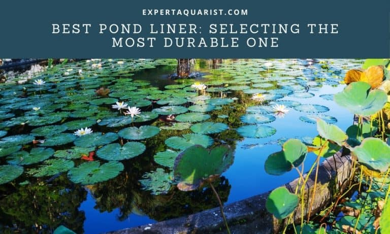 Selecting The Most Durable & Best Pond Liner: Comprehensive Guide