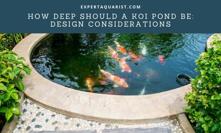 How Deep Should A Koi Pond Be: Design Considerations For A Koi Pond