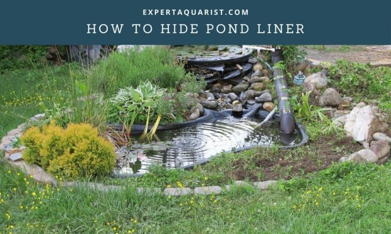 How To Hide Pond Liner: 9 Tricks You Can Apply