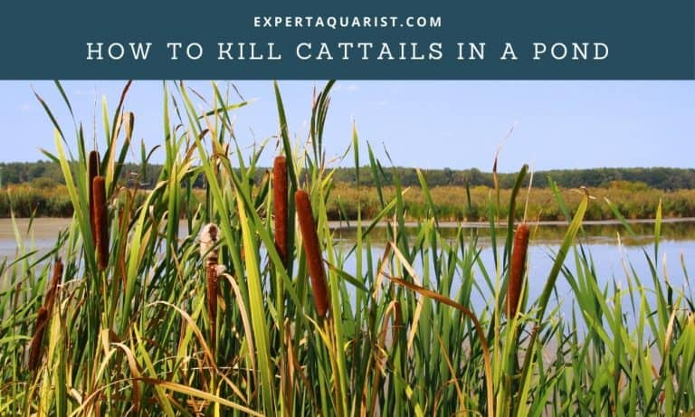 How To Kill Cattails In A Pond: 5 Easy Methods