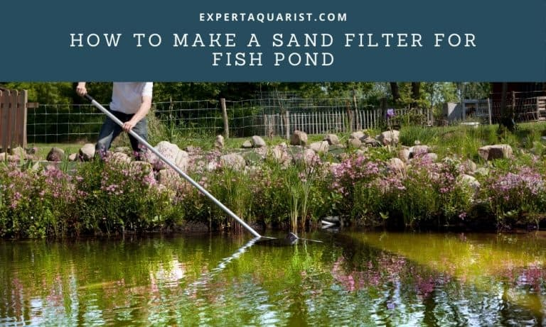 How to make a sand filter for fish pond in 5 Simple Steps