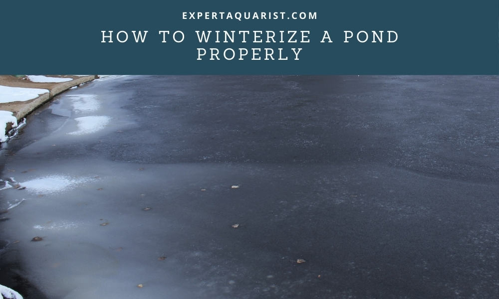 How to winterize a pond Properly