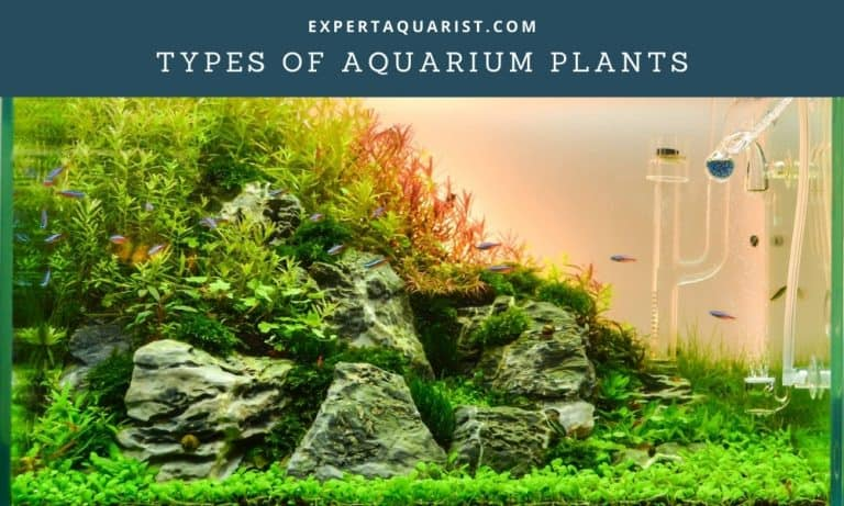 Types of Aquarium Plants And Their Lighting Requirements