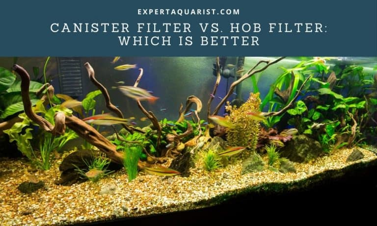 Canister Filter Vs. HOB Filter: Which Is Better for What Aquarium