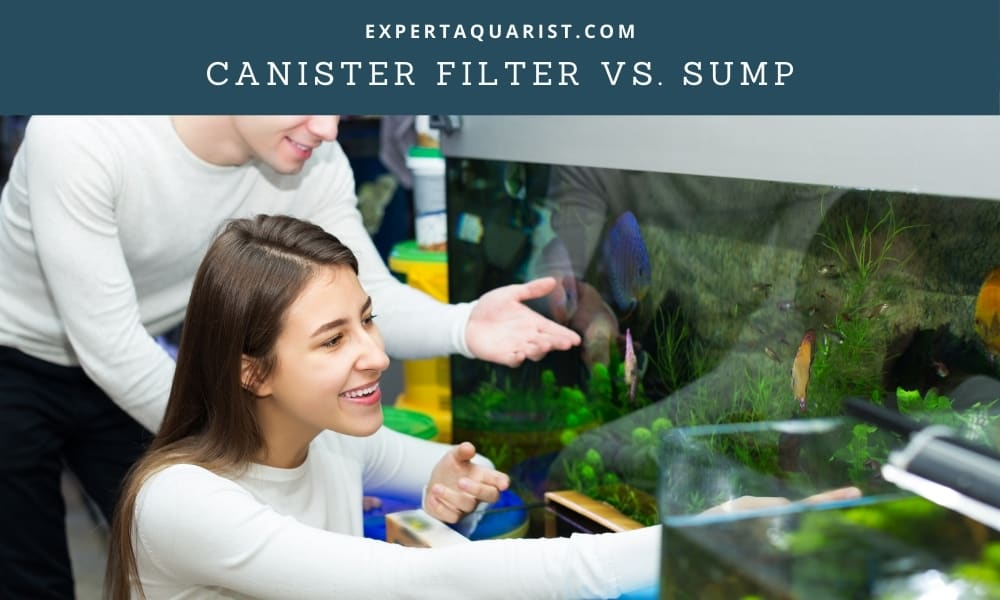 Canister Filter Vs. Sump