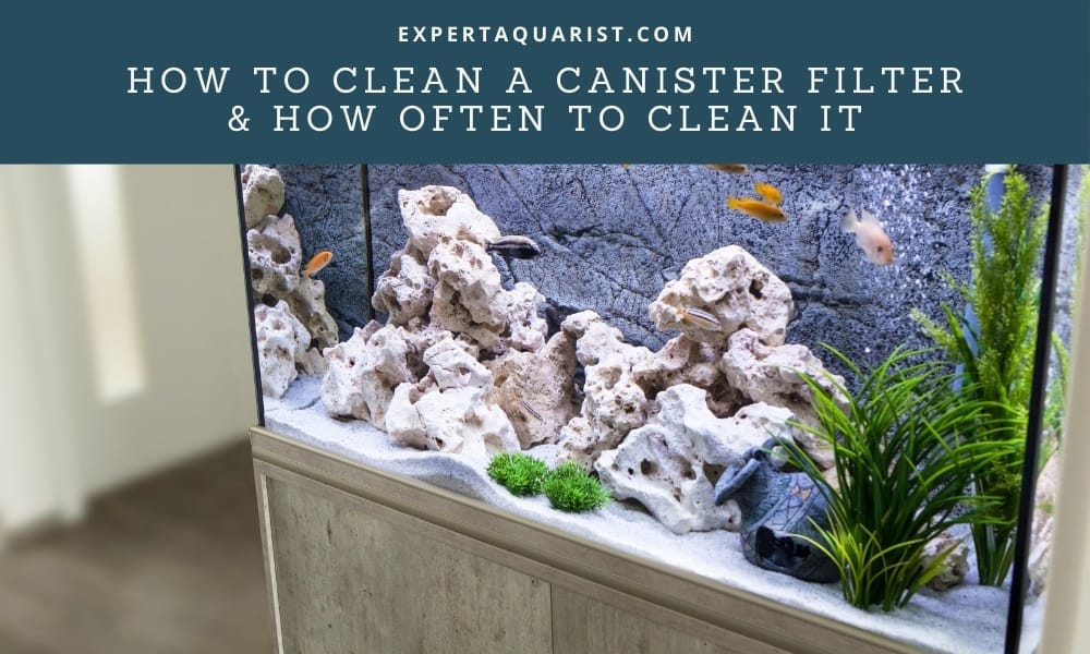 How To Clean A Canister Filter & How Often To Clean It